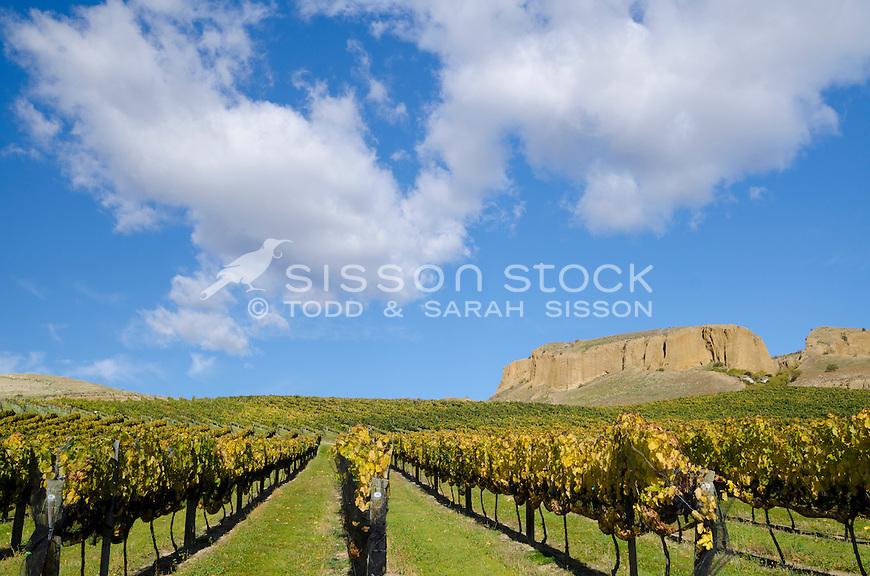 Rows of vines at vineyard, Bannockburn, Central Otago, New Zealand - stock photo, canvas, fine art print