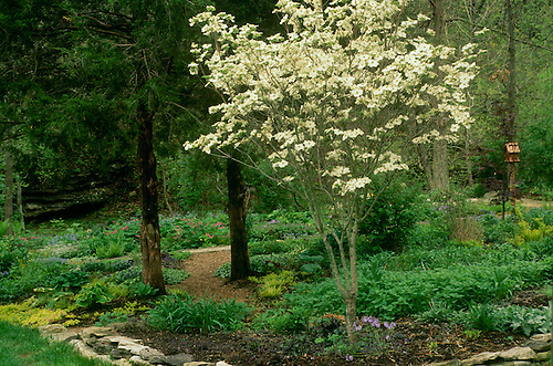 Spring shade garden begins with early blooms of dogwood, Conus florida, and irises-- soon it will be too dense to see the birdhouse