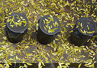 From my kitchen window- autumn leaves on the garbage cans.