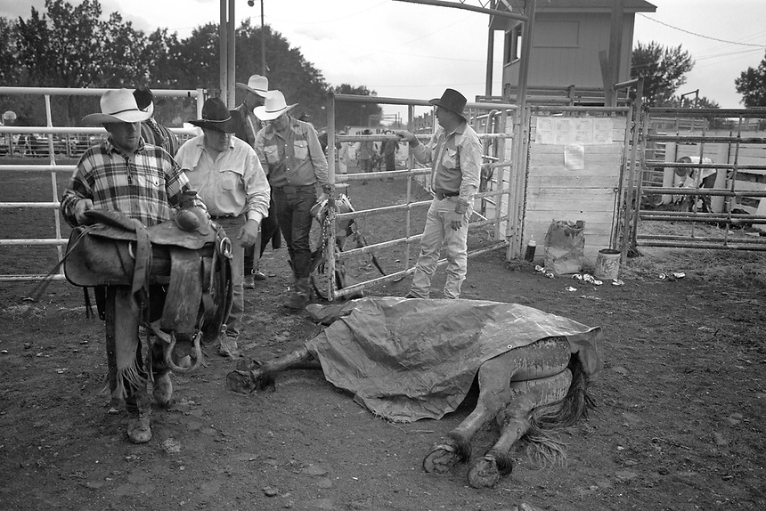 "Cowboys pass a the body of a horse that died after running full speed into the arena wall during a local ""Ranch Rodeo"" in Broadus, Mont. The spooked horse, unused to the crowds and frenzy of a rodeo, was so afriad it didn't see the wall. Its neck broke on impact. Such accidents with livestock are rare at most rodeos, where only trained rough stock are used. Professional rodeo livestock, say most cowboys, are simply doing the job for which they were trained. Ranch rodeos, by contrast, are events for amateur locals, using whatever livestock is available."