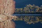 Reflections in  Loch Beinn a' Mheadhoin on cold winter day,, Glen Affric NNR, Scotland.