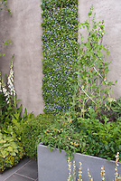 Vegetable Garden with Vertical Growing & Container