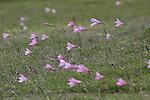 Montevideo, Uruguay - Flowers blow in the wind in Montevideo