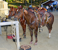 CITY OF INDUSTRY, CA - JULY 16: Horses at the 32nd Annual Bill Pickett Invitational Rodeo Rides, Southern California at The Industry Hills Expo Center in the City of Industry on July 16, 2016 in the City of Industry, California. Credit: Koi Sojer/Snap'N U Photos/MediaPunch