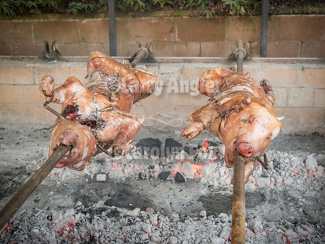 Roasting pigs for the Christmas feast at St. Sava Church, Jackson, Calif.