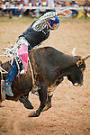 Bull rider in action at Mt Garnet Rodeo.  Mt Garnet, Queensland, Australia