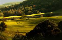 Autumn Pasture