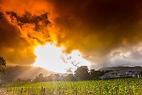 South Africa-Cape Winelands-Misc.