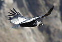 2015_10_23_flight_of_the_condor
