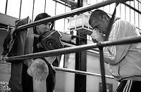 Roma  .Incontro  di boxe dilettanti.I consigli del  maestro Eugenio Agnuzzi al pugile