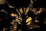 Silhouetted borassus palm, Katavi National Park, Tanzania