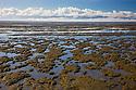 Tidal mud flats on east coast of Coromandel Peninsula, dawn, North Island, New Zealand