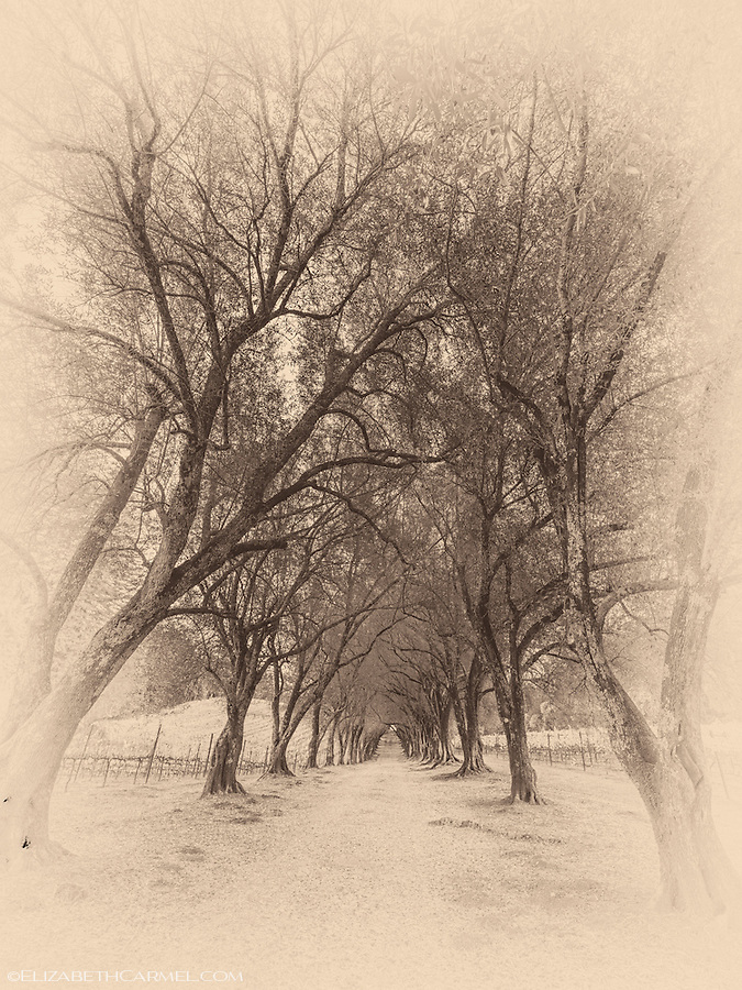 Ancient Grove II