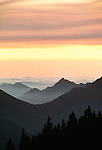 Misty Olympic Mountains behind silhouetted trees, Washington