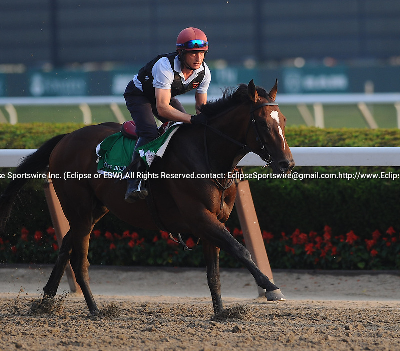Master of Hounds works out at Belmont Park on June 10, 2011 for the Belmont Stakes.
