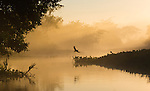 Mist rising off the wetlands of the Pantanal, Brazil