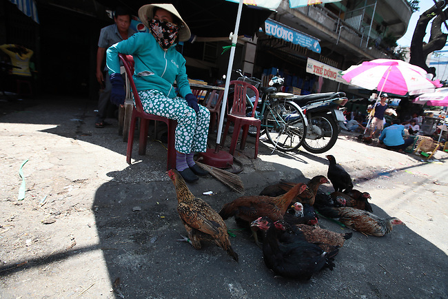 A woman sells fighting cocks at a market in District 11 in Ho Chi Minh City, Vietnam. Aug. 16, 2011.