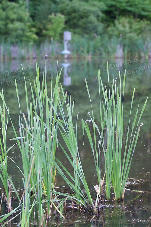 Green pond grass in a pond with a bird nesting box in the background