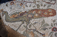 Detail of a mosaic depicting a peacock in the Villa of the Aviary, Carthage, Tunisia, pictured on January 27, 2008, in the morning. Carthage was founded in 814 BC by the Phoenicians who fought three Punic Wars against the Romans over this immensely important Mediterranean harbour. The Romans finally conquered the city in 146 BC. Subsequently it was conquered by the Vandals and the Byzantine Empire. Today it is a UNESCO World Heritage. The Roman Villa of the Aviary, with its octagonal garden set in a peristyle courtyard, is known for its fine mosaics depicting birds. Picture by Manuel Cohen.