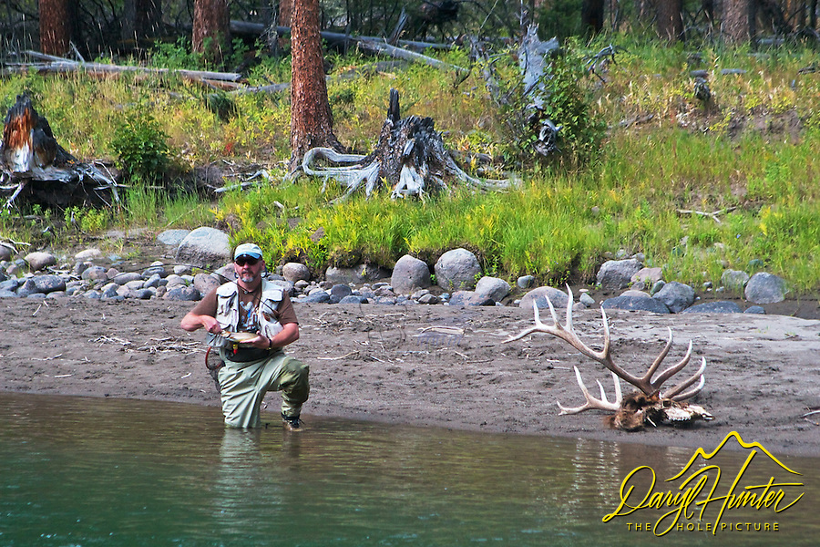 Fly-fisherman showing of catch at Slough Creek in Yellowstone National Park. Some time previous wolves had killed and eaten the seven point Bull elk.