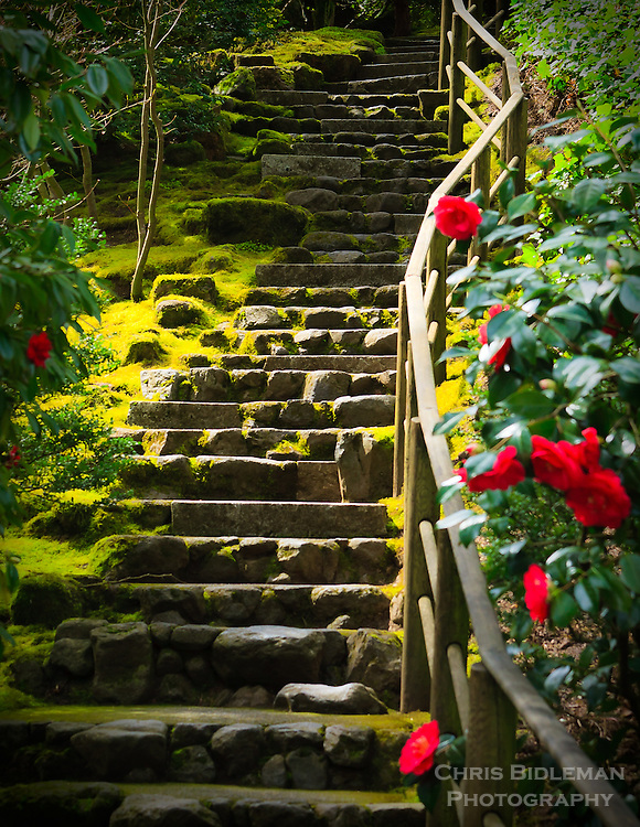 Gift card photo (set of 4) of stairs heading up from Natural Garden in Portland Japanese Garden with red camellias in bloom