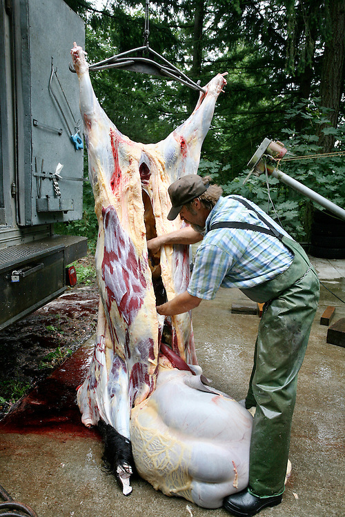 Semi annual bison butchering at Bartholemy Buffalo farm in Beaverton, Oregon. Bison are pasture raised and butcherd on site to reduce the stress associated with trasporting animals to a slaughterhouse. Bartholemy Buffalo donates unused animal parts such as pelts and skulls to the Oregon Zoo in Portland Oregon.  © Carli Davidson