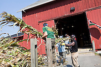 H-2A visa holders from Jamaica help a farmer in Cazenovia, NY, Wednesday September 11, 2013. A H-2A Visa is a temporary, nonimmigrant visa, allowing entry into the U.S. for seasonal agricultural work.