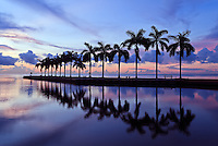Looking out over a row of palm trees on Biscayne Bay, a few minutes before sunrise. Charles Deering Estate at Cutler, Miami, Florida.