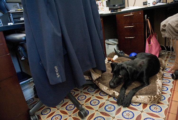 UNITED STATES - AUGUST 26:  Scooter, a black lab, lays on floor of the Senate print gallery in the Capitol during the August Congressional recess.  (Photo By Tom Williams/Roll Call)