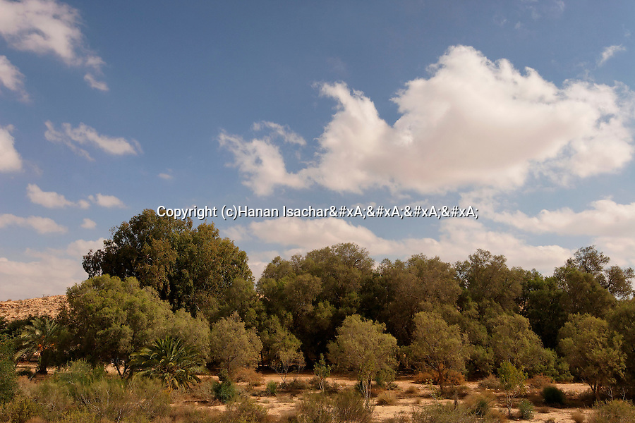 Israel, the Negev desert. A view of Be'erotaim