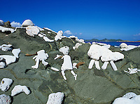 Rock figures<br /> Drunk Bay<br /> St. John<br /> U.S. Virgin Islands