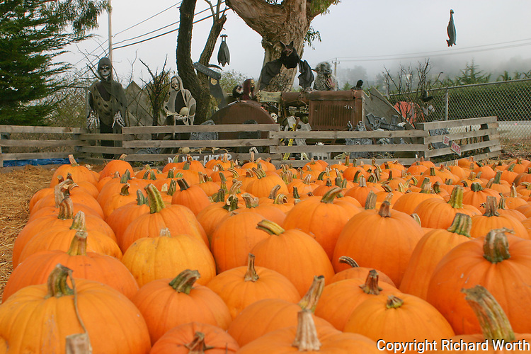 Pumpkins, pumpkins and more pumpkins, and behind, a goblin and ghoul filled cemetery - Halloween fun in Half Moon Bay.