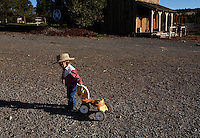Dressed as a cowgirl, 2 1/2 year old Josie Lauman heads out to the barn with her little toy horse to see watch her mother train wild horses.<br /> <br /> Kitty Lauman trains mustangs--as she says working with the horses, not against them.  They have a ranch in Prineville, OR.<br /> <br /> Kitty, her husband Rick and their children, Josie, 2 &frac12;,  and Tanner, 5,  ride mustangs. Kitty Lauman started her career as a horse trainer at the tender age of nine, under the guidance of her grandfather, John Sharp. <br /> <br /> She later became a top Pee Wee and High School Rodeo contestant, competing in barrel racing and cutting, among other events. Despite her mother's assertion that &quot;horse training isn't a real job,&quot; Kitty managed to make a living as a trainer after high school (and her mom now helps out with the business!) <br /> <br /> Kitty won the title of Miss Rodeo Oregon in 1994, and since then, has continued to expand her horse training knowledge and experience.  She placed second in the Extreme Mustang Makeover, a national competition in 2008.