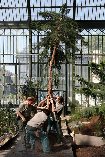 New Caledonia Glasshouse (formerly The Mexican Hothouse), 1830s, Charles Rohault de Fleury, Jardin des Plantes, Museum National d'Histoire Naturelle, Paris, France. Low angle view of gardeners working at the plantation of an Araucaria, an evergreen coniferous tree.<br /> The New Caledonia Glasshouse, or Hothouse, was the first French glass and iron building. The Plant History Glasshouse (formerly Australian Glasshouse), 1830s, Rohault de Fleury is visible through the windows.