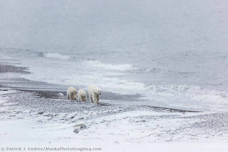 Walk along the shore of Barter Island in the Beaufort Sea, Arctic, Alaska.