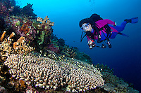 Female scuba diver, Suelaine Gin  observing small reef fish seeking shelter among the hard corals on a coral reef off New Britain Island, Papua New Guinea. Model Released.