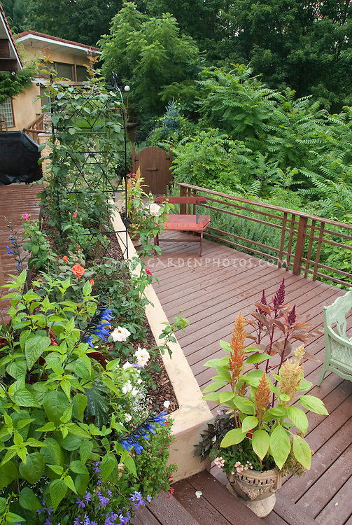 Beautiful backyard deck plantings plant flower stock photography - Planting rose shrub step ...