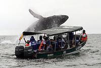 Avistamiento de Ballenas / Whales Watching 16-07-2013