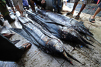 Billfish for sale at Paotere fish market, Makassar, Sulawesi, Indonesia.