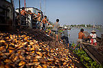 "River people unload ""dua nuoc"" water coconuts, which are grown in the river, on the Hau Giang River, a tributary of the Mekong River, in Long Xuyen, the capital of An Giang Province, Vietnam. When the Mekong River reaches Vietnam it splits into two smaller riveres. The ""Tien Giang"", which means ""upper river"" and the ""Hau Giang"", which means ""lower river"". Photo taken on Monday, December 8, 2009. Kevin German / Luceo Images"