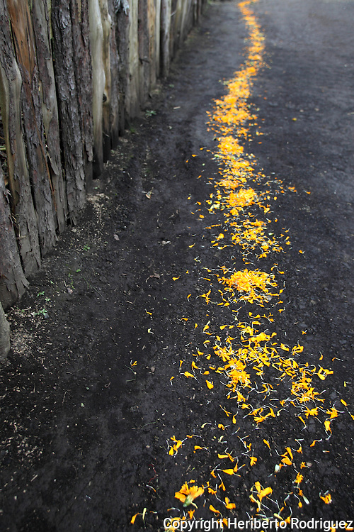 A path of cempaxochitl flowers (flowers of the Deads) is put on the floor of a house to  mark the way back home to the deads in the village of Acaxochitlan, in northern state of Hidalgo, during the festivities of the Day of the Deads. Hundreds of Native villages pay homage to their deads on the eve of November 2 as a tradition since the preHispanic times. Photo by Heriberto Rodriguez