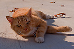 Windsong Winery has several cats; when not kept elsewhere, they take turns to greet visitors.