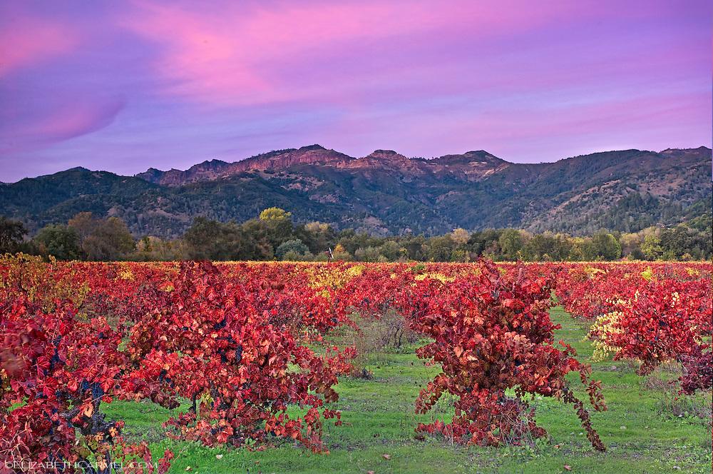 Wild Vines in Autumn