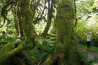 QX1419-D. Ferns and moss-covered trees in the Hoh Rainforest, Olympic National Park. Washington, USA.<br /> Photo Copyright &copy; Brandon Cole. All rights reserved worldwide.  www.brandoncole.com