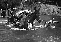 Mule skinners attached to 2nd Bn., 475th Inf. Regt., Mars Task Force, stripped down to their bare skin to lead mules through the swift river that impeded their progress to Bhamo, Burma, November 17, 1944.  S. Sgt. Quaid.  (Army)<br /> NARA FILE #:  111-SC-197939<br /> WAR &amp; CONFLICT BOOK #:  1156