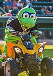 1 September 2014: The Vermont Lake Monsters Mascot Champ rides his ATV prior to a game against the Tri-City ValleyCats at Centennial Field in Burlington, Vermont. The ValleyCats defeated the Lake Monsters 3-2 in NY Penn League play. Mandatory Credit: Ed Wolfstein Photo *** RAW Image File Available ****