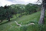 grasslands and oaks at Sunol Regional Wilderness