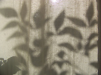 Artistic Value: Shadow of Leaves through Screen and Curtain