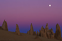 Full moon over Pinnacles at dusk; Nambung National Park, Australia