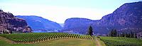 """Vineyards at """"Vaseux Lake"""", South Okanagan Valley, BC, British Columbia, Canada"""